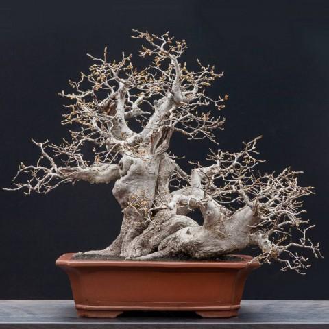 Skulpture živog drveća