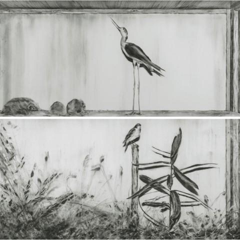 Katarina Ivanišin Kardum, Sll Landscape Series V, 2016, Himantopus himantopus i/and Saxicola rubetra, ugljen na papiru / charcoal on paper, svaka / each 76 x 183,5cm