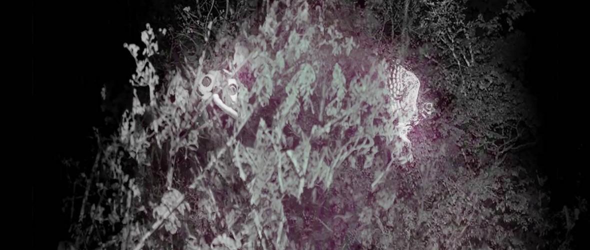 """pozivnica /otvorenje izložbe / ANDREA RESNER  """"Rhymes of the White Crow: the Epilogue"""" / SALON GALIĆ, četvrtak 29.07. u 20:00 sati"""